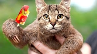 This Animal is REAL!?!? (Hybrid Animals)