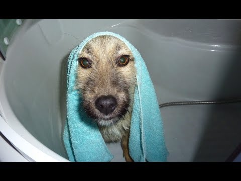 Homeless Dogs Rescued Taking A Bath For The First Time