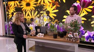 Så sår du fröna rätt - Johans Orre tipsar om ätbara växter - Malou Efter tio (TV4)
