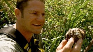 Saltwater crocodile protects her nest | Deadly 60 | BBC