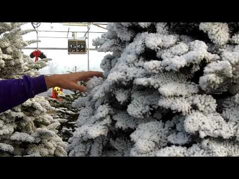 Christmas Tree Flocking Styles