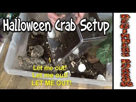 Halloween Crab Setup - Beginners Burrow