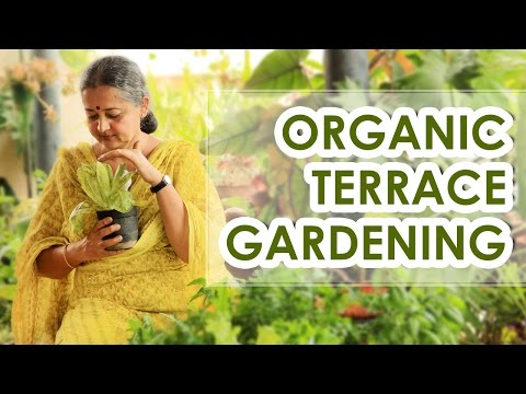 Organic Terrace Garden - The new fitness mantra