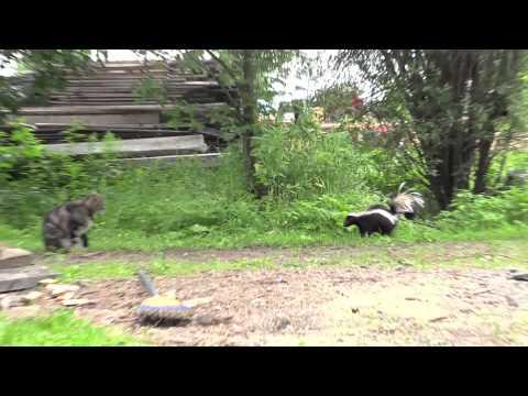 Cat Meets Skunk