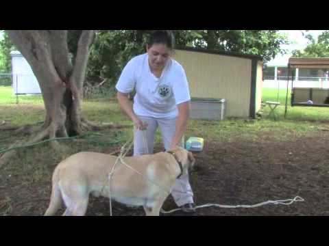 How to Train a Dog to Weight Pull