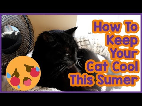 How to Keep Your Cat Cool in Summer! 5 Tips on Keeping Your Cat Cool in the Summer Heat!