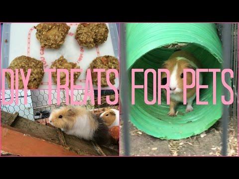 DIY Guinea Pig and Rabbit Cookies | Furry Friends
