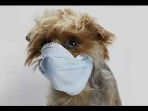 How To Treat Kennel Cough In Dogs