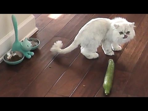 PRANKING CLOUD WITH A CUCUMBER!!