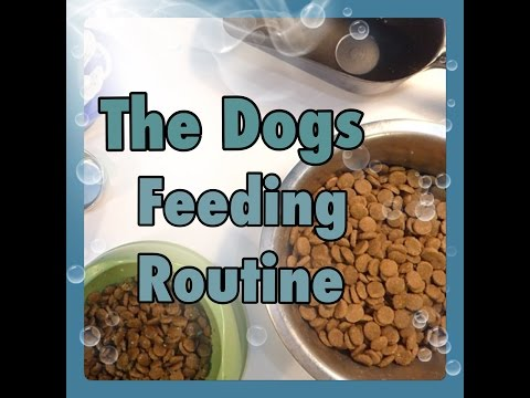 THE DOGS FEEDING ROUTINE | UPDATED | MEGAN MOLL