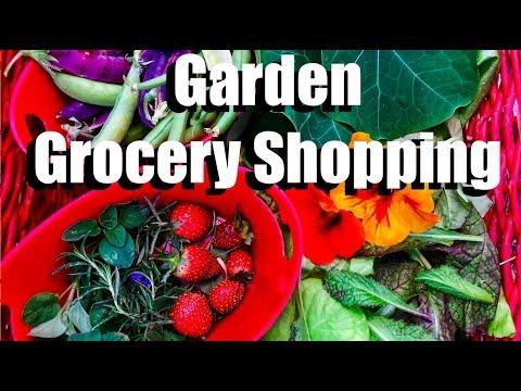 Salad Harvest - Garden Grocery Shopping!  // Lettuce Tower & Container Garden