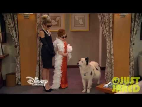 Download Dog With A Blog Stan Has Puppies Clip