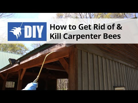 How to Get Rid of & Kill Carpenter Bees