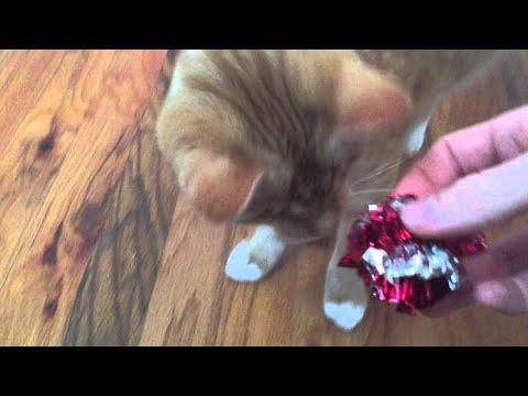 My Blind Cat Plays Fetch || ViralHog