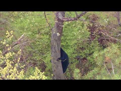 Bear in tree in New Jersey