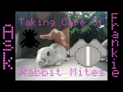 Taking Care of Rabbit Mite plus Rabbit Update | Ask Frankie