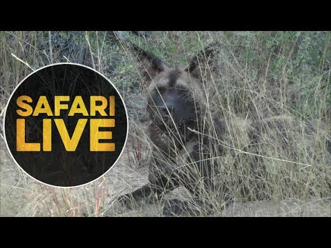 safariLIVE - Sunrise Safari - June, 11. 2018