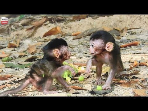 Wow New Born baby can move fast/ New born can walk/ Happy to watch New Baby Youlike Monkey 1317