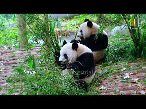 Global Bamboo & Rattan Congress