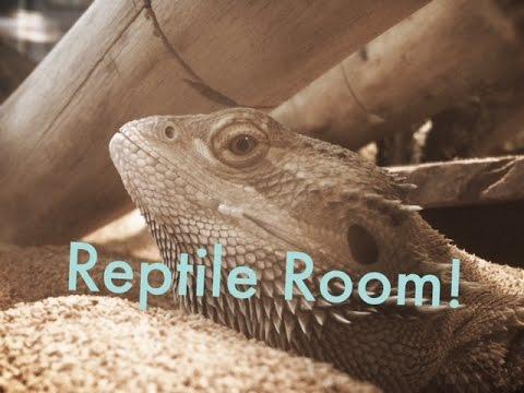 Reptile Room February 2017