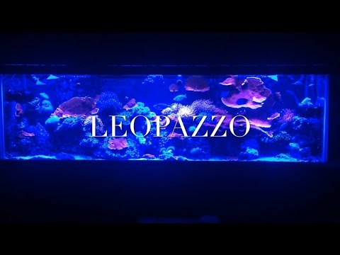 New 75 gallon peninsula coral reef fish tank build (part1)