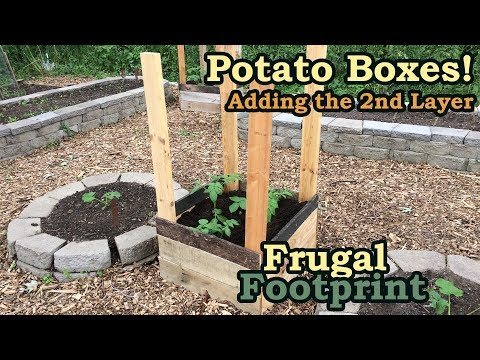 Grow More Potatoes - Adding the 2nd Layer to the Potato Boxes