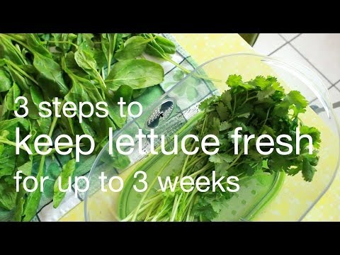 how to keep lettuce fresh for 3 weeks | xoxo cooks