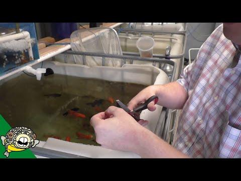 Test Strip Aquarium Hack! Water Change Aquarium how often? Daily Dose #21