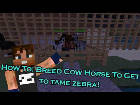 Mo Creatures How To Tame A Zebra [MINECRAFT 1.7.10]