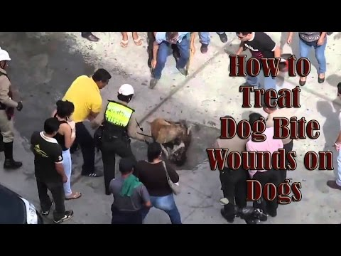 dog bite dog - How to Treat Dog Bite Wounds on Dogs