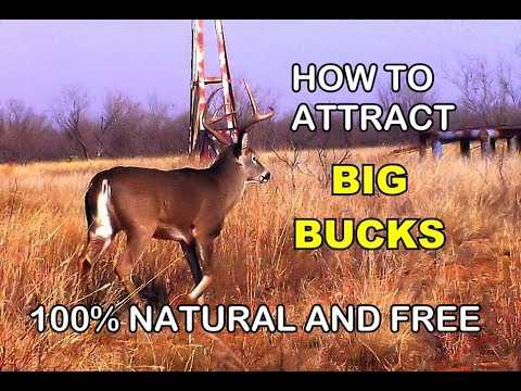 🦌   How to Attract Big Bucks.  Deer Hunting technique used for thousands of years. Really Works!.