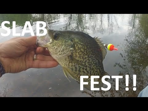 Catching SLAB CRAPPIE from SHORE with LIVE Minnows!!