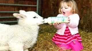 El Momento Más Divertido Entre Bebés Y Animales 4 👶🌻🐐 Colección De Niños Traviesos Con Animales