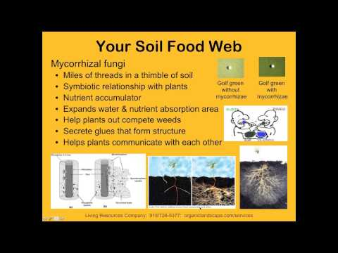 Exploring the Mysteries of Soil Biology