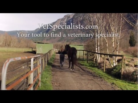 What is a Veterinary Specialist? Learn at VetSpecialists.com