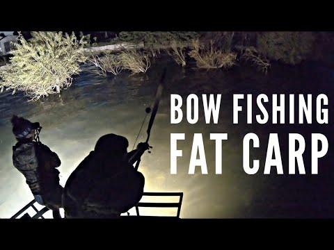 Bow Fishing Fat Carp 2018   Bowmar Bowhunting  