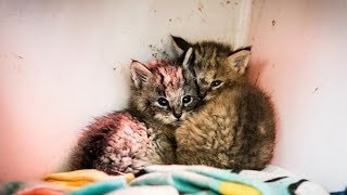 A Closer Look At 'Kittens' Found On A Dirt Road Reveals They're Not Regular Cats At All