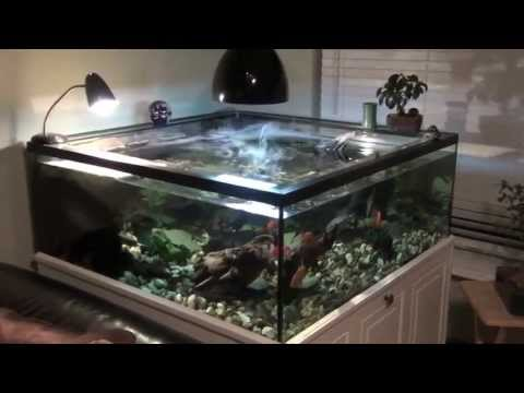 Turtle Tank sump and Filter Set Up