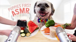 Download Puppy Tries ASMR For The First Time Video