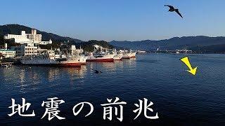 地震の前兆…東日本大震災、阪神淡路大震災でも〇〇が!