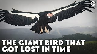 The Giant Bird That Got Lost in Time