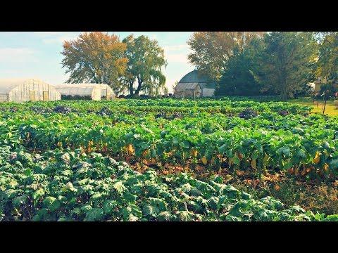 Growing Brussels Sprouts | Iowa Ingredient