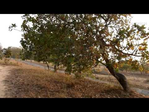 Nikon Coolpix B700 Motion Video Test Full HD 1080p