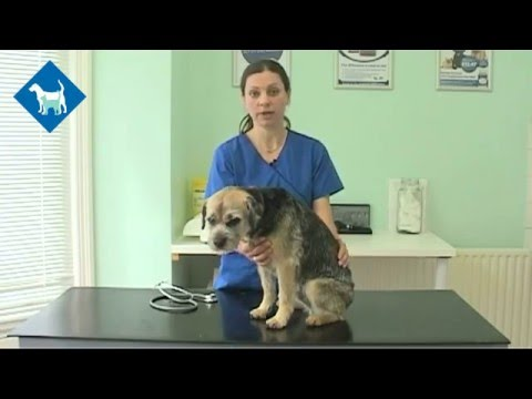 What to expect when your pet goes for its annual health check