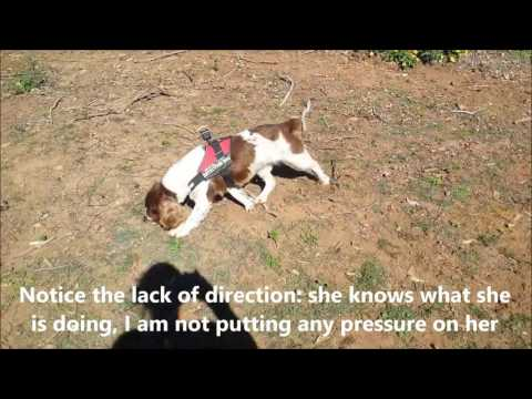 Olivia and Taz the detection dog in action: 29 July 2016