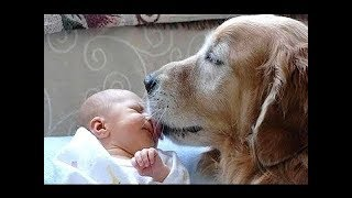 Funny Dogs Meeting BABIES for the First Time Compilation