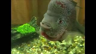Fish says Allah