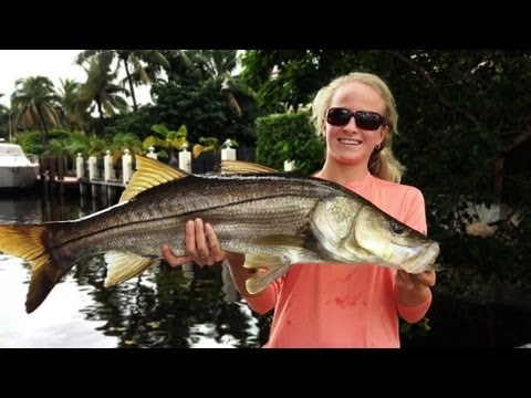 Awesome Canal Snook Fishing!