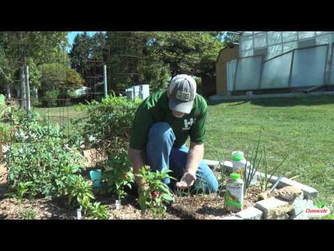 Garden Tutorial: Planting Bean Seeds