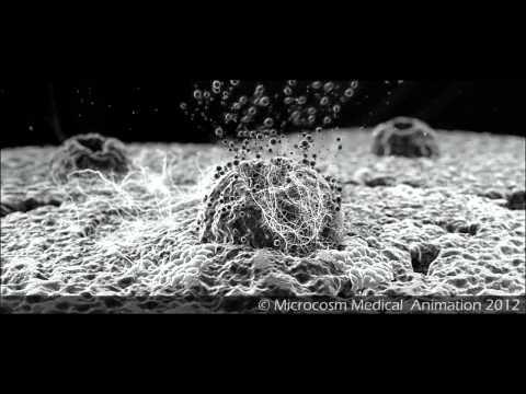 Medical Animation : Cell Surface SEM Medical Animation by Microcosm Medical Animation
